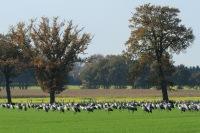 Kraanvogels Diepholz 01-11-2014 048LW