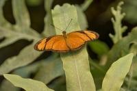 Vlinder Emsflower 05-10-2017MG_3700